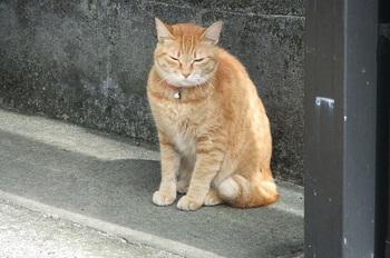 DSCF4434薄目の猫b.jpg